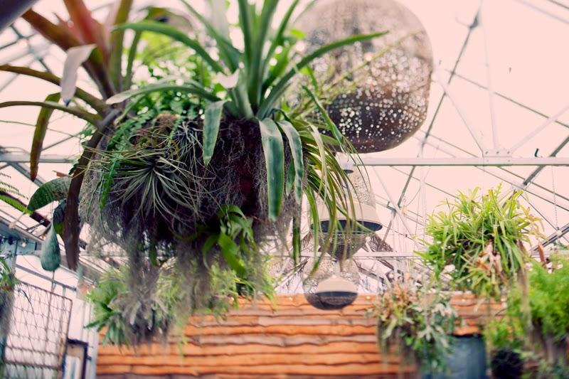hangingairplantdetails.TerrainatStyers.AlisaTonggCelebrant.JoyeusePhotography