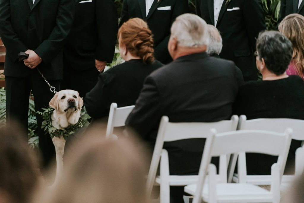 best puppy alisa tongg celebrant horticultural center wedding m2 photography