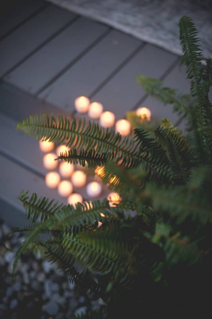 candles and ferns detail Blue Hour Elopement at The Living wall at Promise Ridge Rob Yaskovic Photography