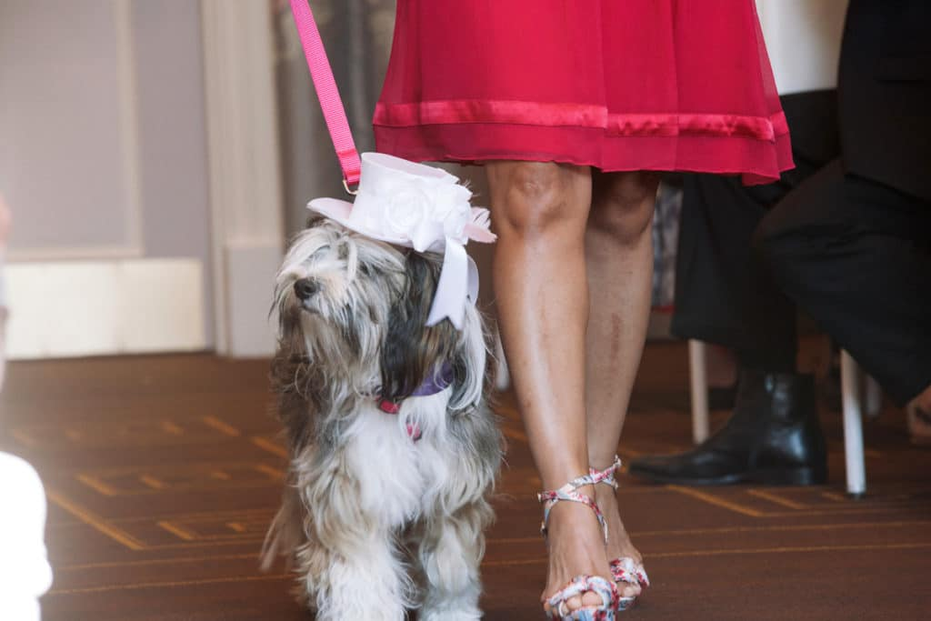 puppy down the aisle alisa tongg celebrant elaine zelker photography